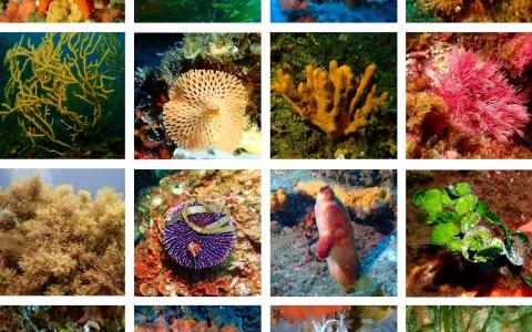 Un panel photographique de 16 des 250 espèces suivies dans le cadre du suivi des habitats marins pendant la mission