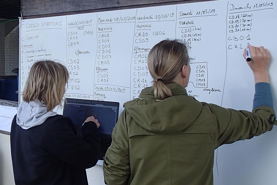 Identification des nouvelles stations de la journée, par Line Le Gall et Fanny Lepareur  © MNHN - E. Vassard