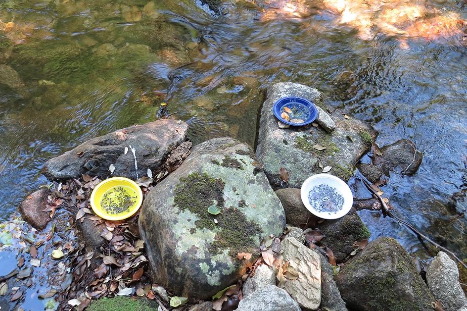 Pièges assiettes posées près d'une rivière