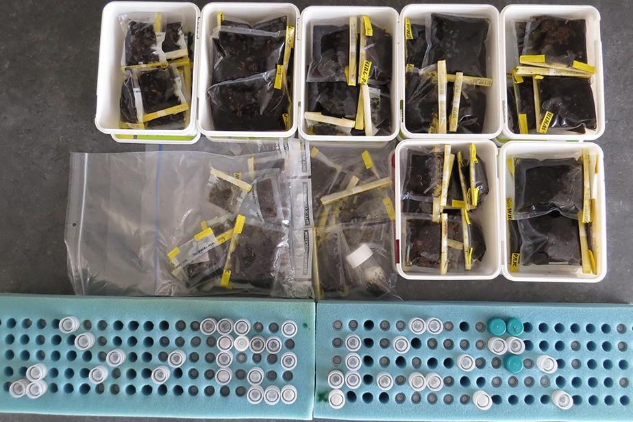 Lots de diptères échantillonnés pendant l'expédition et à trier par famille