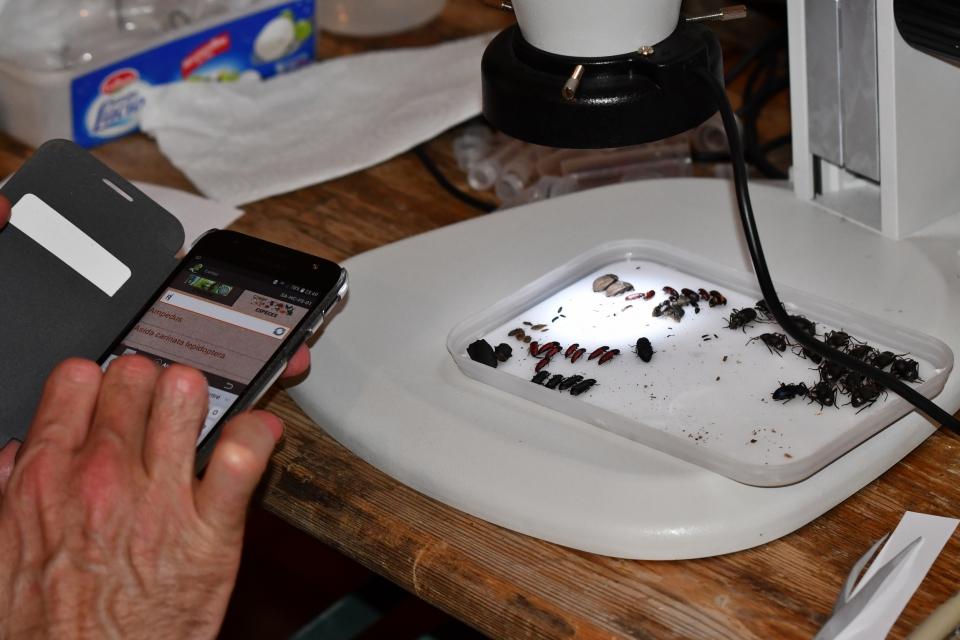 Le rituel Carnat : saisie des données sur le terrain et au laboratoire  © MNHN - J. Touroult