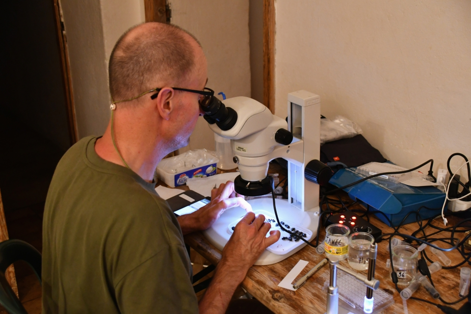 Le tri des spécimens a été effectué chaque jour, en isolant les spécimens destinés au code-barres ADN et ceux nécessitant d'être déterminés ultérieurement © MNHN - J. Touroult