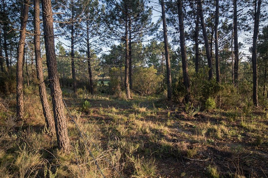 La forêt de Pinia  © Jean Ichter